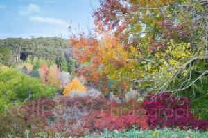 Autumn 2014-10